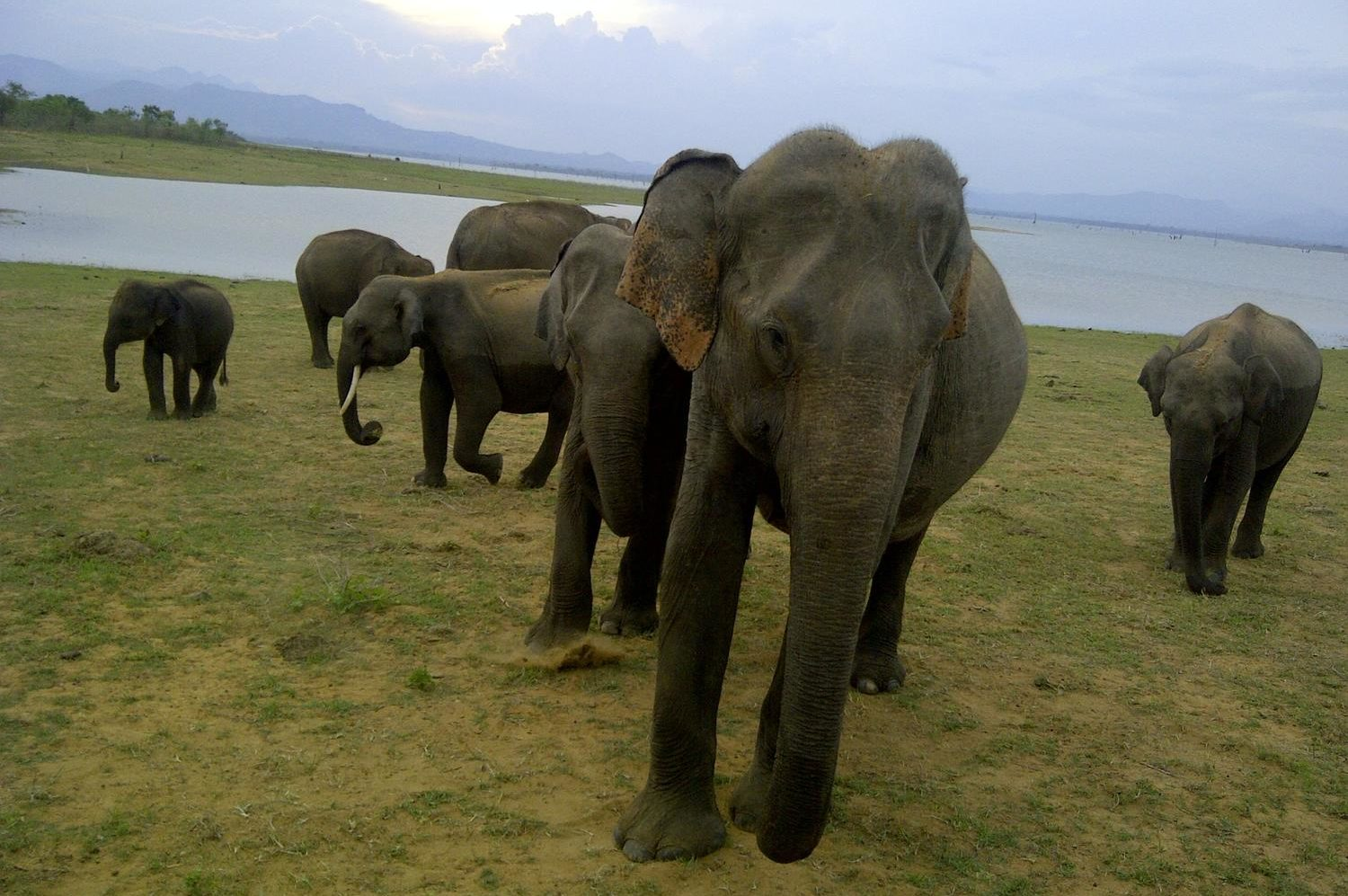 Tiwari Travel Elephants